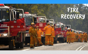 The AltCollection Fire Recovery Survey